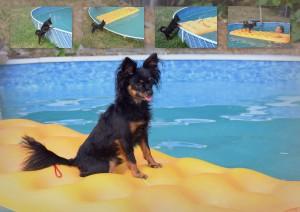 1-vyber-2015-bobik-v-bazene.jpg