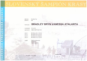 ch-sk-bradley-bryn-a.jpg